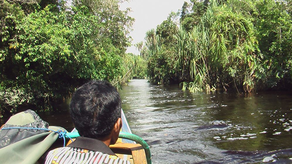 Raubbau: Die Lunge Südostasiens wird brennen