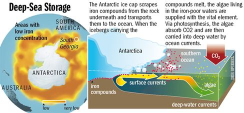 Carbon storage in the Antarctic depths.