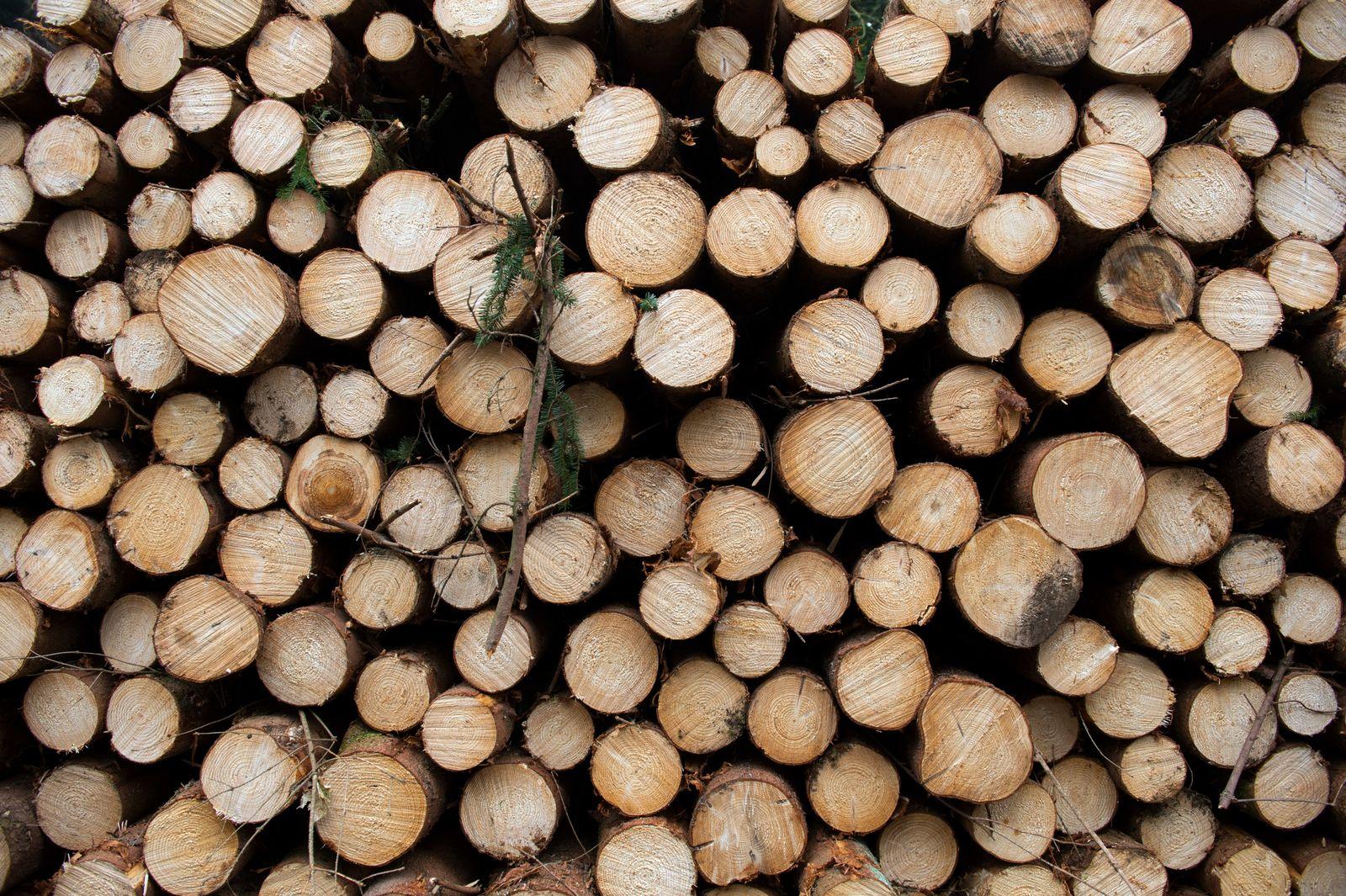 Holz/ Holzstämme