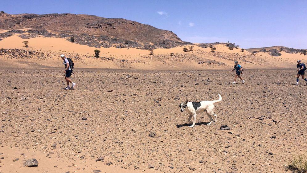 Hund bei Sahara-Ultramarathon: Auf vier Pfoten durch die Wüste