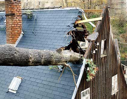 Einschlag: Im Städtchen Zschopau im Erzgebirge stürzte ein entwurzelter Baum in ein Wohnhaus