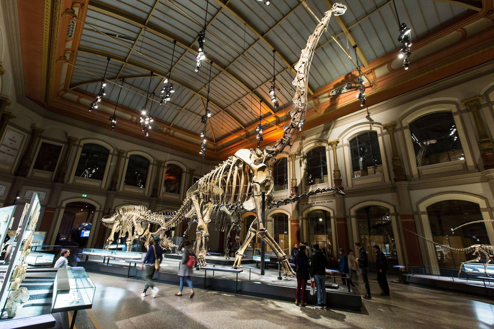 19/ Feature: 34. Lange Nacht der Museen, Skelett des Brachiosauriers (Brachiosaurus brancai) mit einer Hoehe von 13,27 M