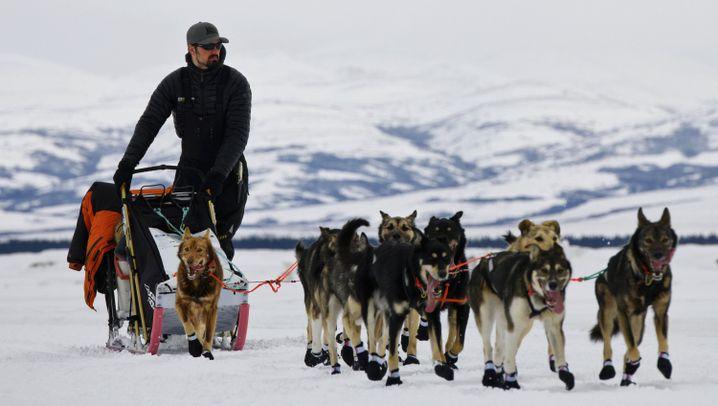 Iditarod 2019: Kaiser und sein tierisches Team