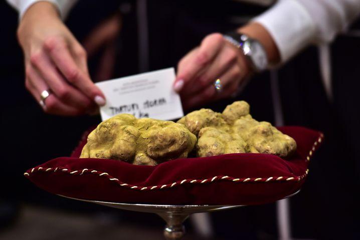 Geradezu klein im Vergleich zum 1,5-Kilo-Pilz: Der Trüffel, der nach Hongkong flog