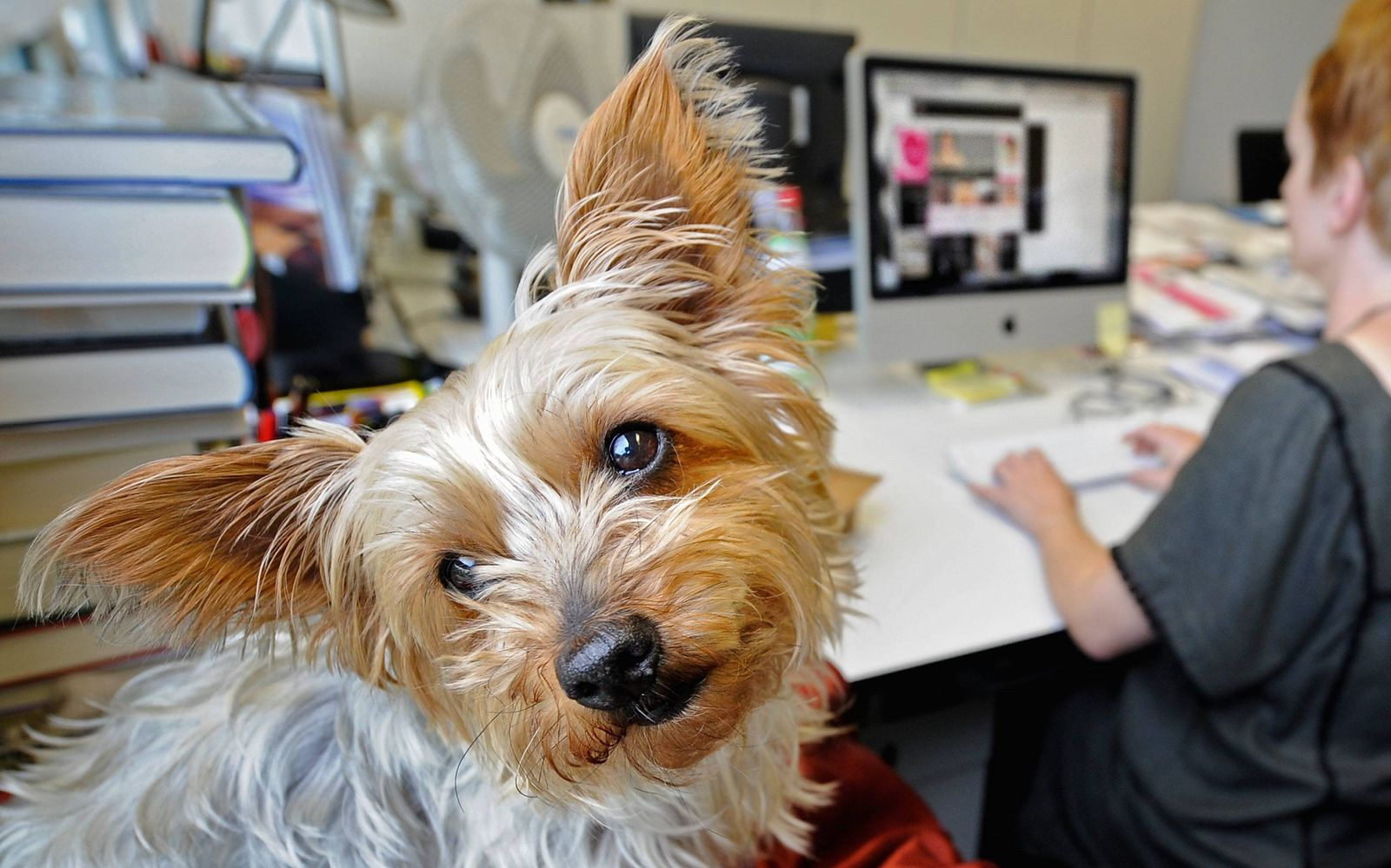 NICHT VERWENDEN Symbolbild Haustier/Hundg am Arbeitsplatz