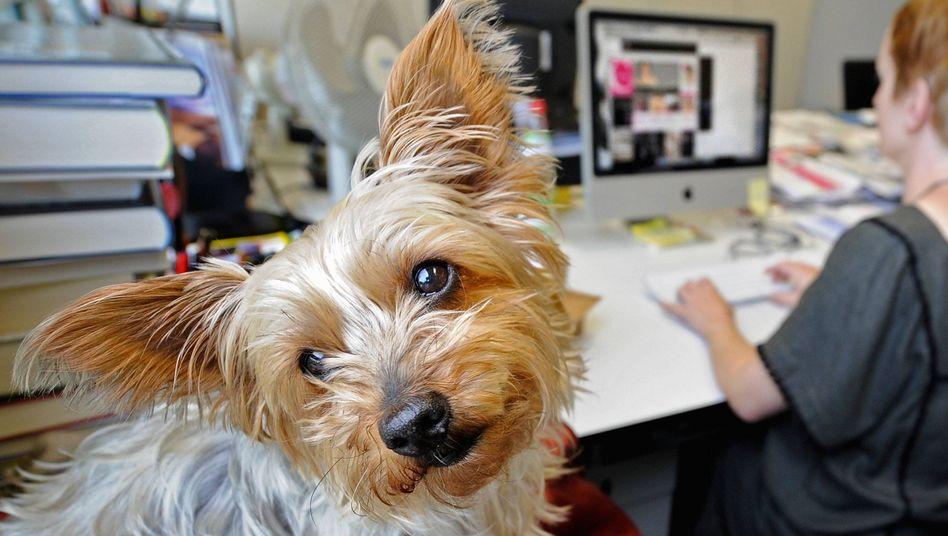 Immer treu: Sogar Hunde kommen gelegentlich zu der Ehre einer Widmung
