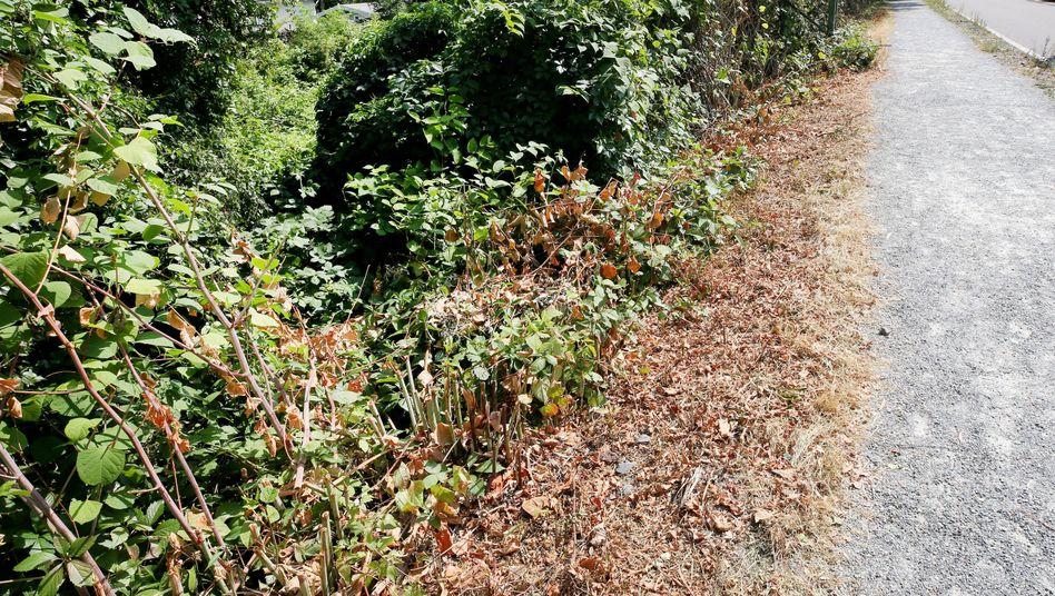 Gebüsch in der Nähe des Tatorts: Eine junge Frau soll von einer Gruppe Jugendlicher sexuell missbraucht worden sein