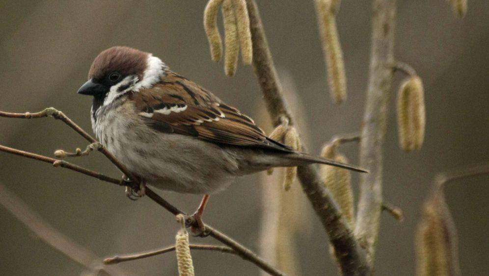 Feldvögel in Europa: Auf dem absteigenden Ast