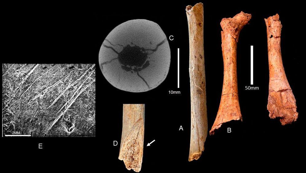 Verräterische Kratzspuren: Waren Neandertaler Kannibalen?