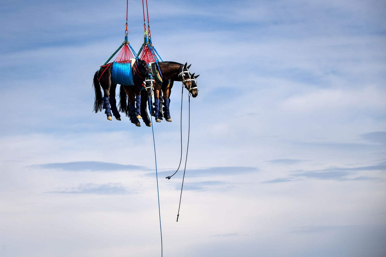 Horse-transporting by helicopter in Switzerland