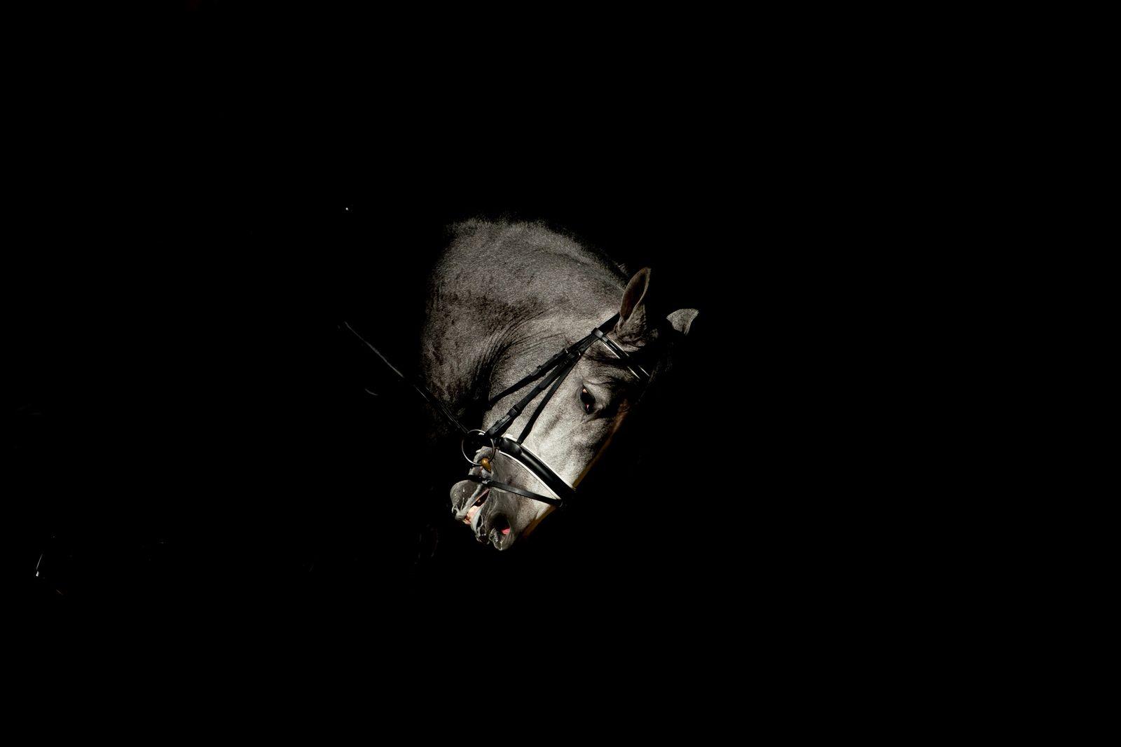 SICAB Equestrian Trade Show, Seville, Spain - 13 Nov 2018