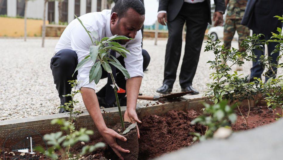 Ministerpräsident Abiy Ahmed: Im 19. Jahrhundert waren noch 35 Prozent der Fläche Äthiopiens mit Wald bedeckt - Anfang des 21. Jahrhunderts waren es noch vier