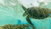 Im Atlantik schwimmen mehrere Millionen Tonnen Plastikmüll