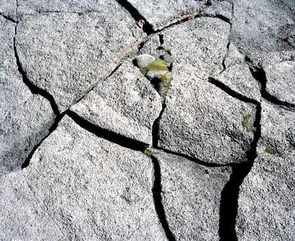 Surtsey: Erstes Leben auf totem Stein