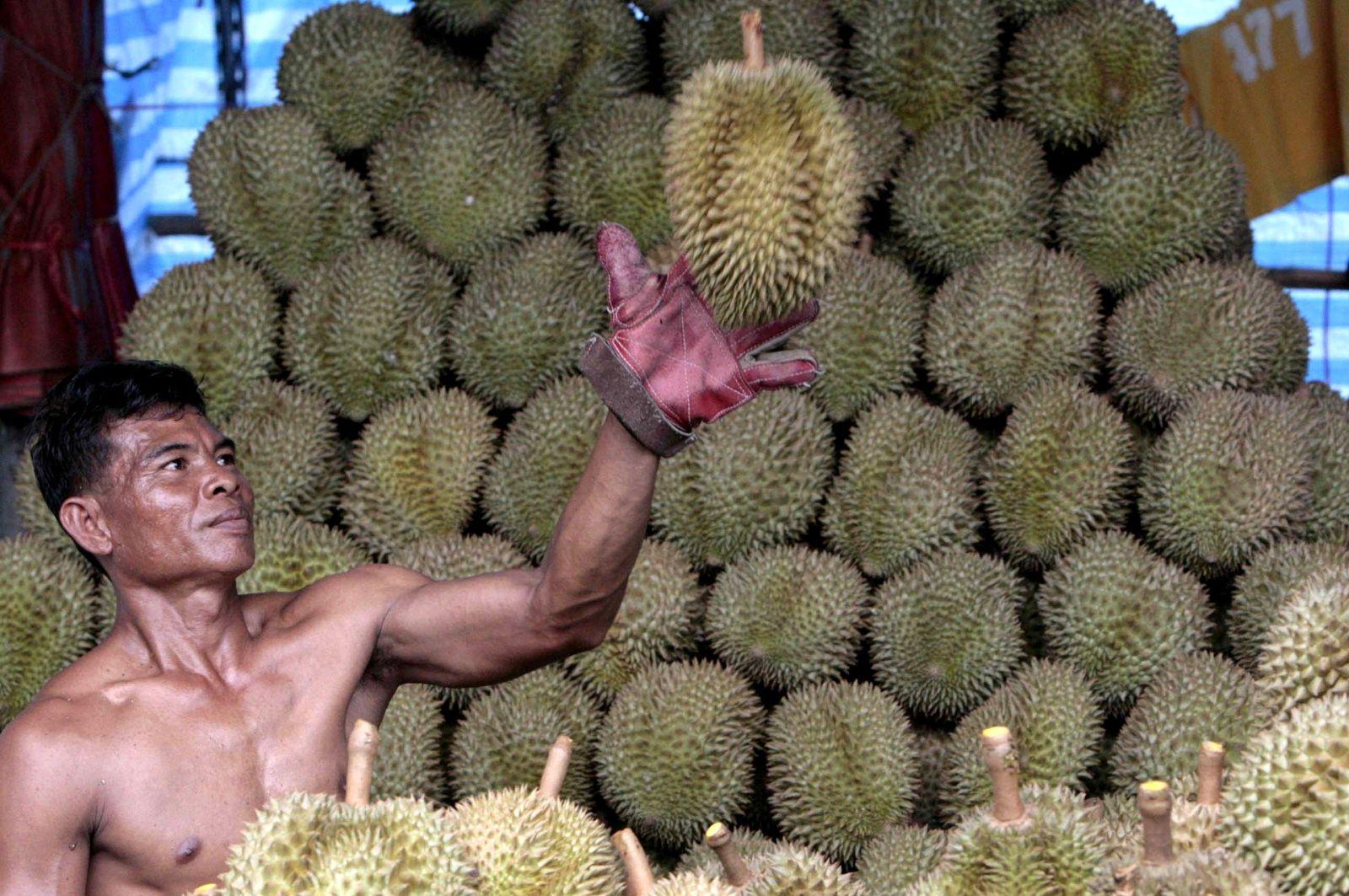 Durian / Thailand /