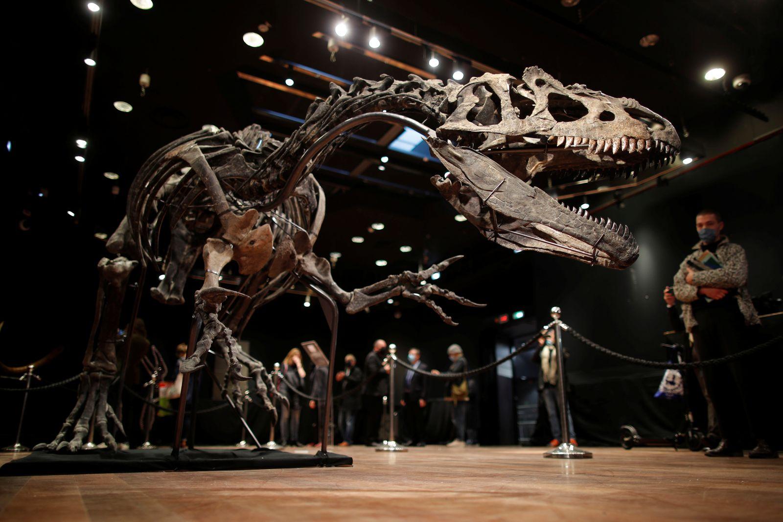 150 million-year old skeleton of an Allosaurus on auction