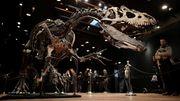 Dinosaurier-Skelett für mehr als drei Millionen Euro versteigert