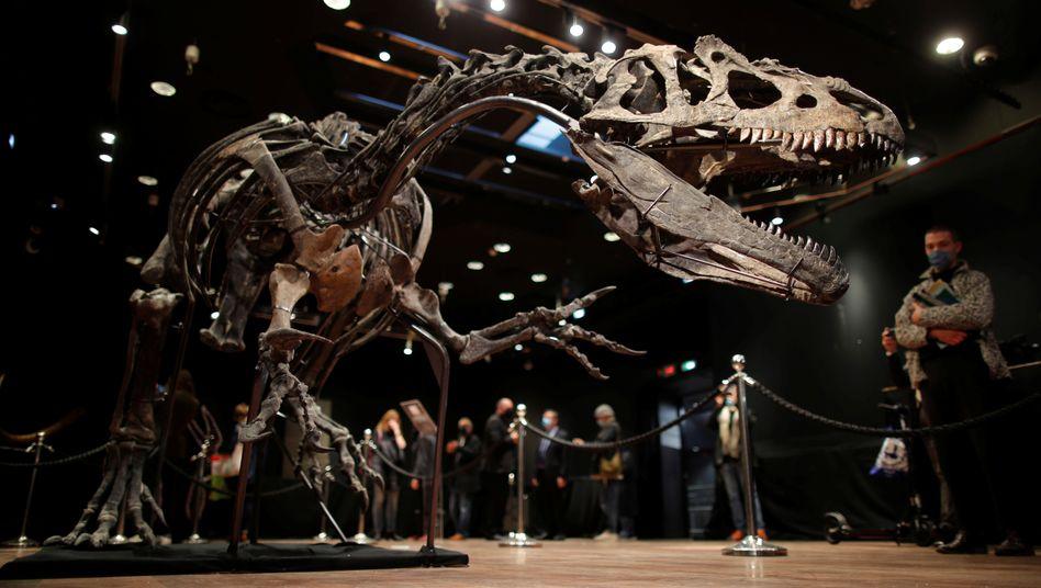 Das Skelett des Allosaurusim Auktionshaus Drouot in Paris