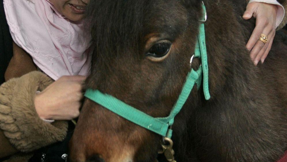"""Blinde Studentin mit Begleitung: """"Ist das ein Pferd?"""""""
