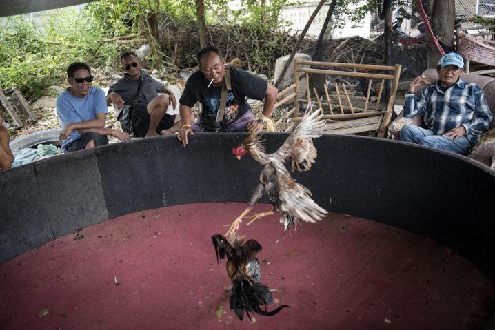 Boxcamp-Besitzer Biau (3.v.l.) beim Hahnenkampf