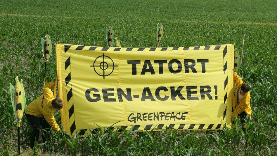 Greenpeace-Protest in Brandenburg (Archivbild): Widerstand gegen das Gengetreide