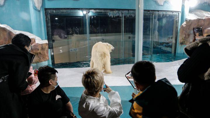 Fotostrecke: Eisbärengehege im Hotel