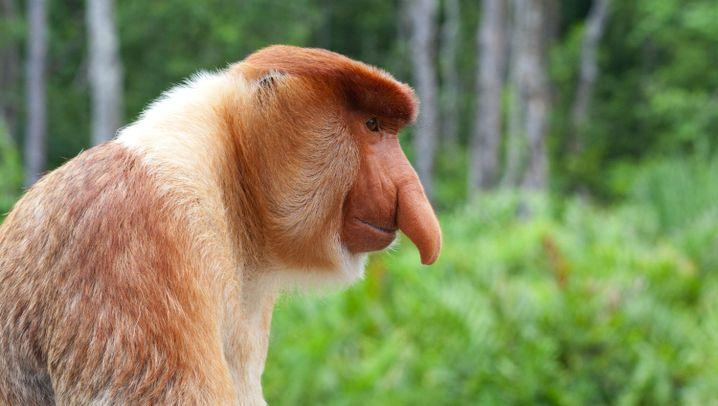 Tierforschung: Bin ich schön?