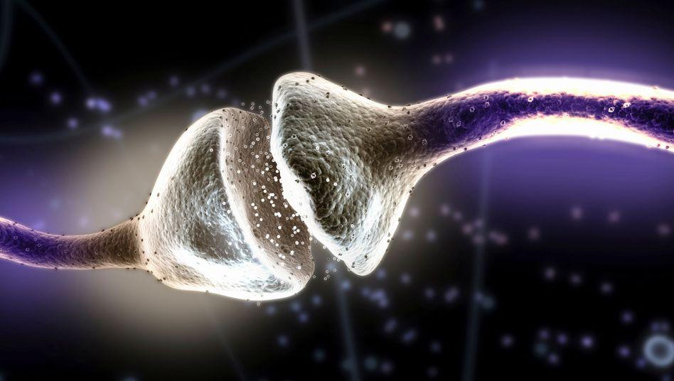 Medizin-Nobelpreis: Zell-Express im menschlichen Körper