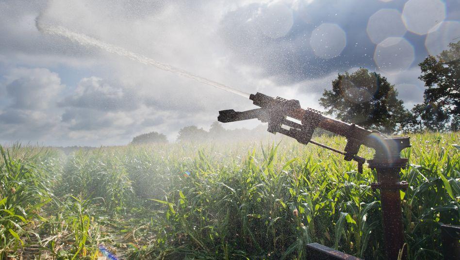 Viele Landwirte müssen seit Wochen ihre Felder extra bewässern