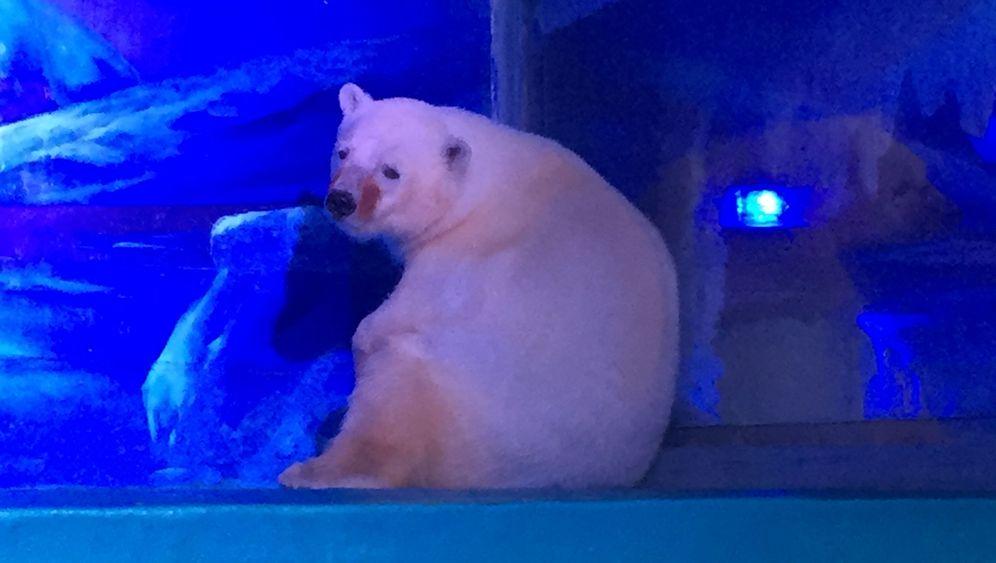 Kaufhaus in China: Eisbär und Co. als Touristenattraktion