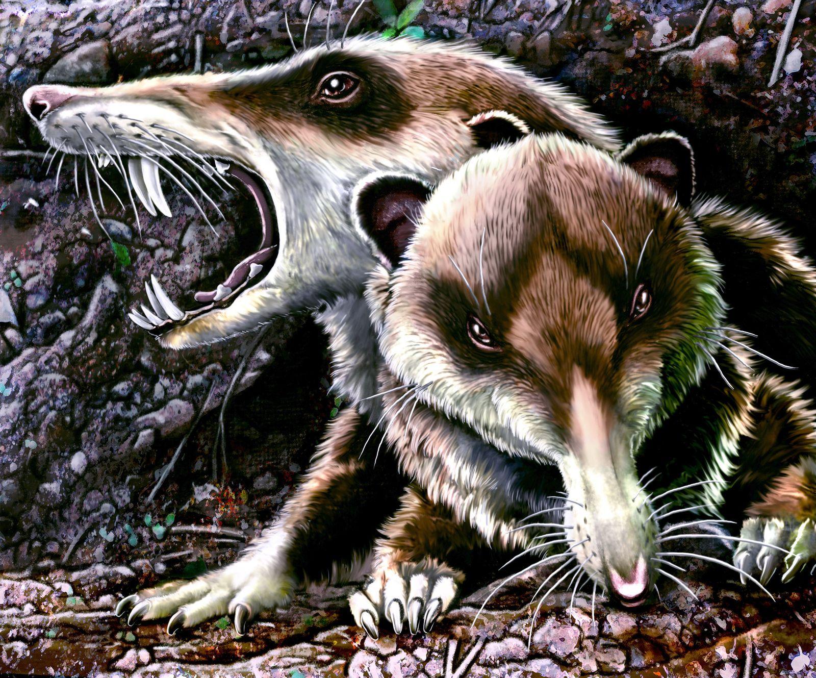 EINMALIGE VERWENDUNG Säbelzahneichhörnchen / NATURE
