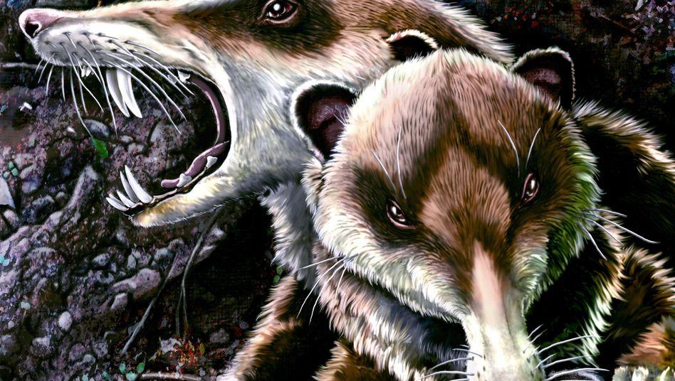 Cronopio dentiacutus (Illustration): Frühe Säugetiere mit spitzen Zähnen