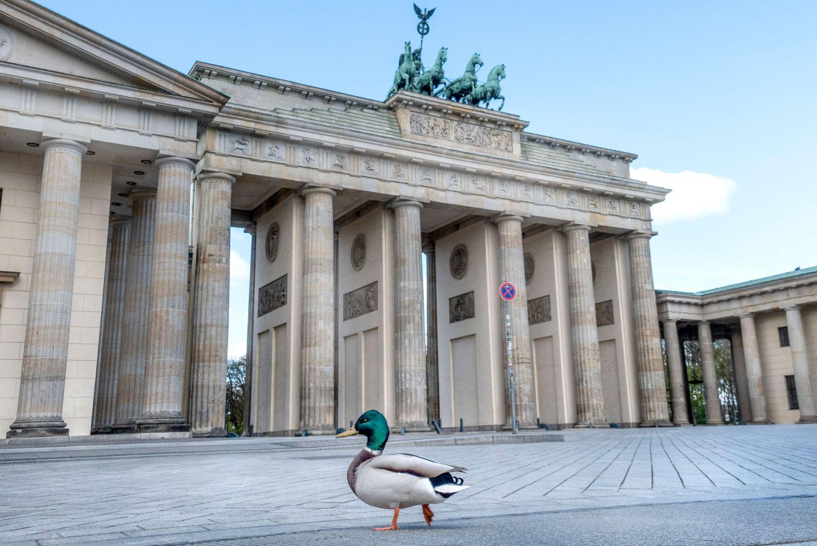 Ducks at Pariser Platz in Berlin, Germany - 14 Apr 2020