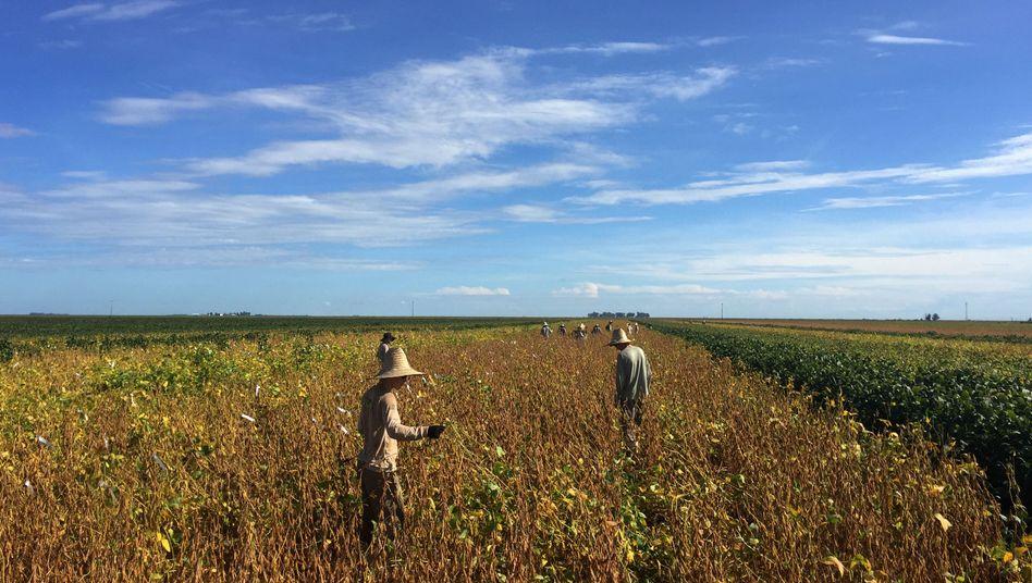 Arbeiter auf einer Sojaplantage in Brasilien