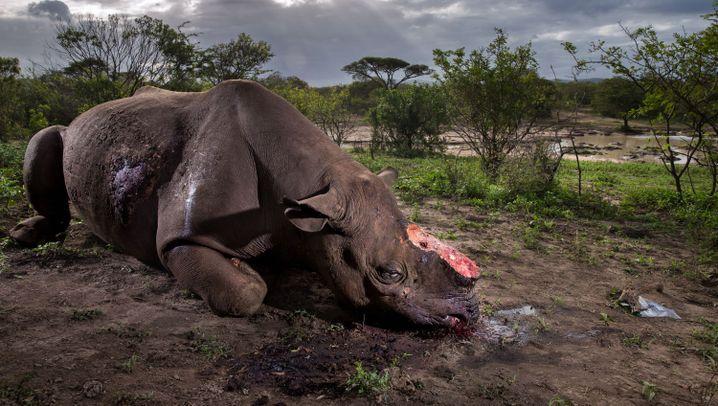 Wildnis-Fotos des Jahres: Der Tod des Nashorns
