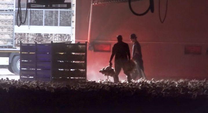 Videoaufnahmen von Peta: Tierschutzwidriges Verhalten bei der Ausstallung