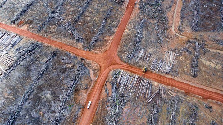 Für Palmölplantagen gerodete Flächen in Papua