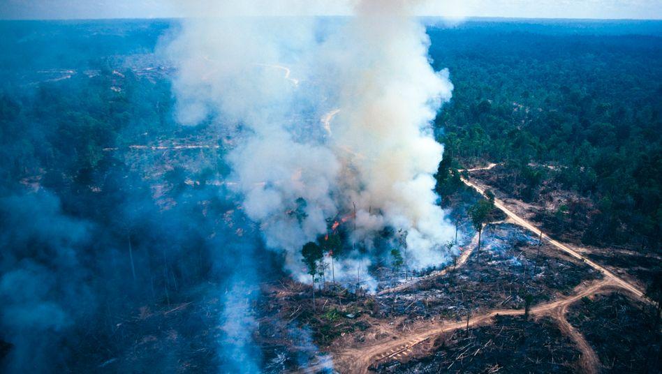 Regenwaldzerstörung (Symbolbild): Die Zahl der Waldbrände in Brasilien erreichte ein Zehnjahreshoch