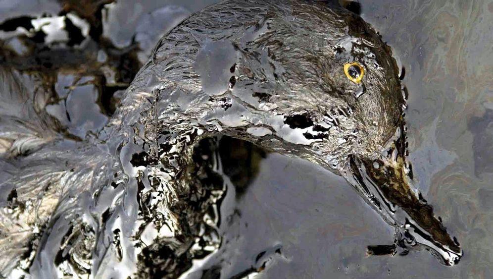 Bohrplattformen: 8000 Tonnen Öl verschmutzen jährlich die Nordsee