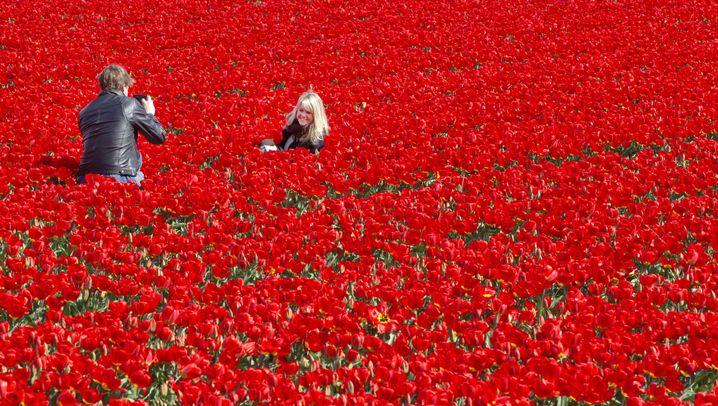 Selfie-Wahn: Respekt für die Tulpen!