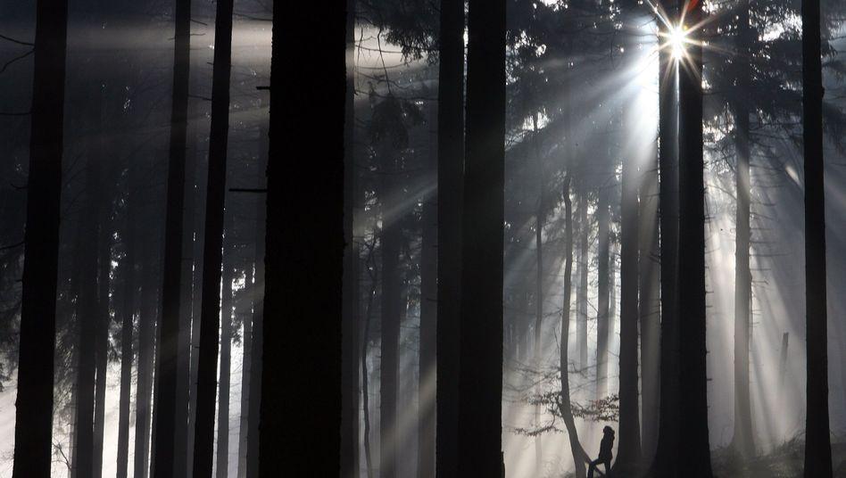 Wald: Schwebteilchen-Bildung durch Isopren behindert