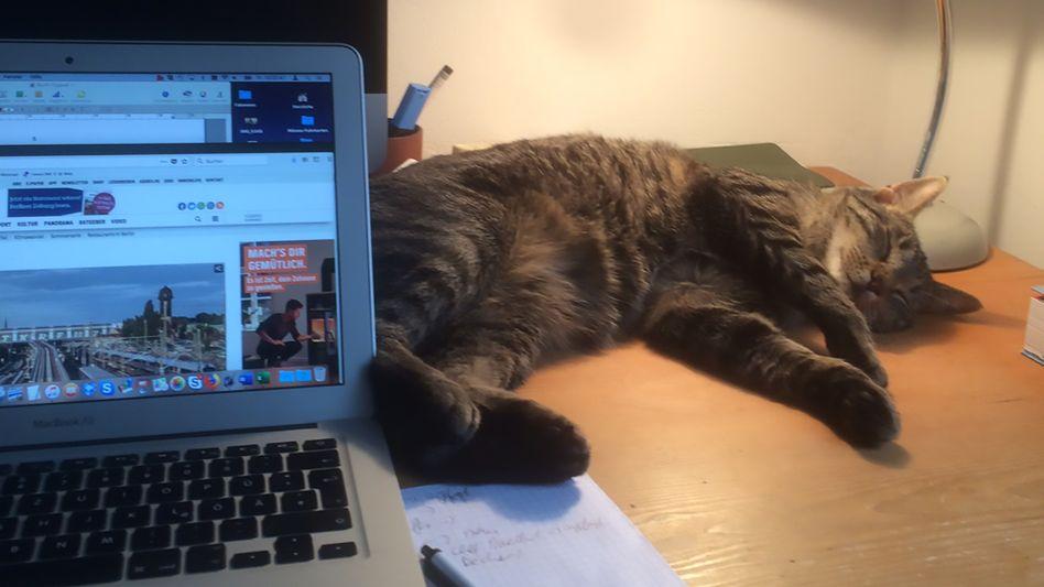 Elfriede Jelinek auf meinem Schreibtisch