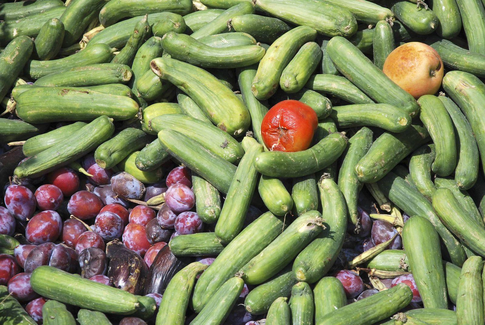 EINMALIGE VERWENDUNG Weggeworfenes Gemüse / Containern