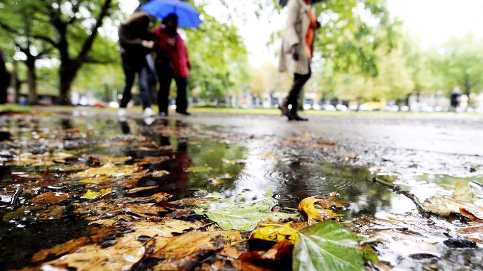 Herbstlicher Regen: Experten zweifeln am Sinn von Biowetter-Vorhersagen