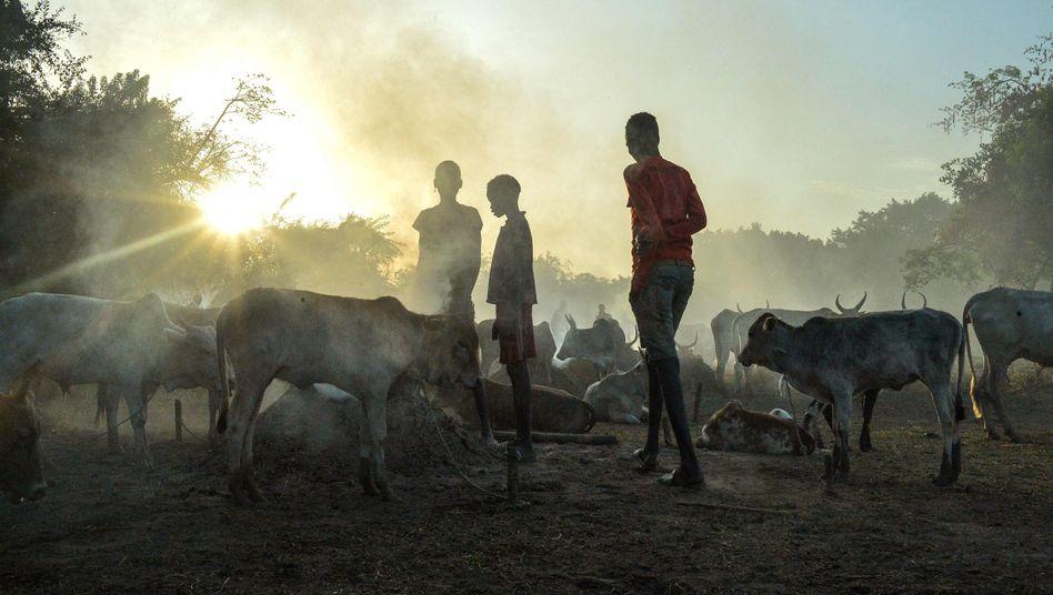 Von extremer Armut betroffen: Junge Farmer mit ihrer Herde in Udier im Südsudan