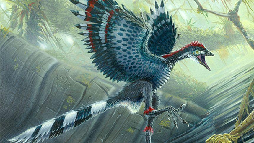 """Urvogel Archaeopteryx: Kleiner Körper, lange """"Arme"""""""