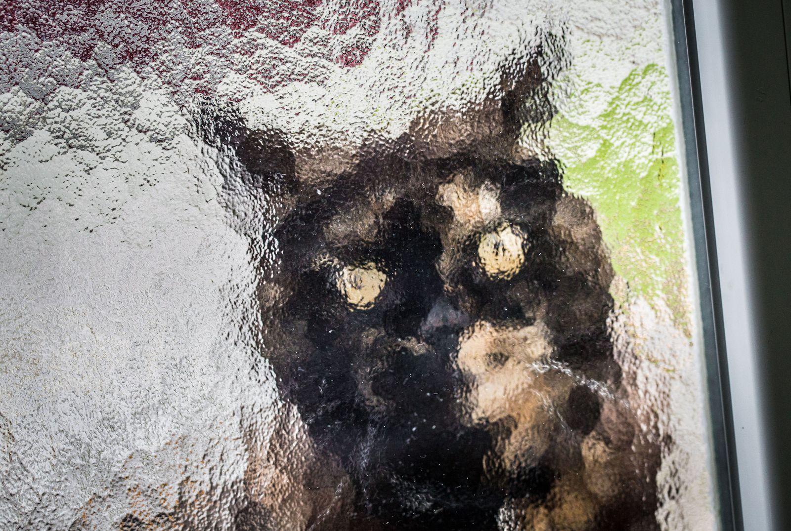 Regenwetter - Katze will ins Haus