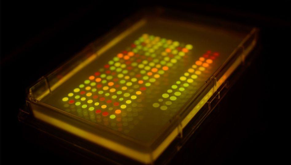 Geheimnisträger Bakterien: Verschlüsselung durch farbige Punkte