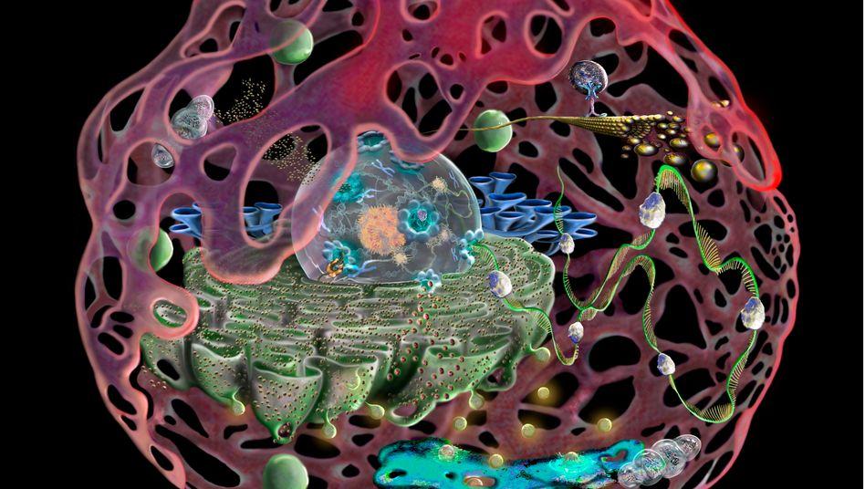 Menschliche Zelle (Illustration)