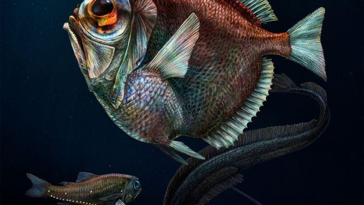 Tiefseefische: Was guckst du?